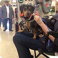 Adopt A Pet :: Sneakers - Delaware, OH