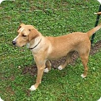Adopt A Pet :: Thunder - Morehead, KY