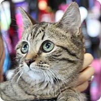 Adopt A Pet :: Miss Buttons - Potomac, MD