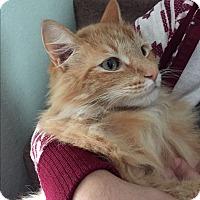 Adopt A Pet :: Abby - Nuevo, CA