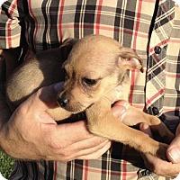 Adopt A Pet :: Randy - Sugarland, TX