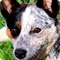 Adopt A Pet :: HANNAH(SO  SMART!!) - Wakefield, RI