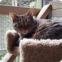 Adopt A Pet :: Helen - Port Coquitlam, BC