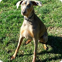 Adopt A Pet :: Lanie - New Richmond, OH