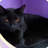 Adopt A Pet :: Alexa - Tucson, AZ