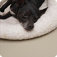 Adopt A Pet :: Skippy - Palm Bay, FL