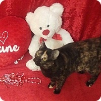 Adopt A Pet :: Annie - Arlington/Ft Worth, TX