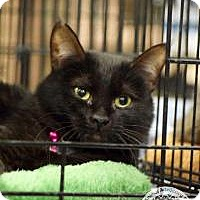 Adopt A Pet :: Olive - Salt Lake City, UT