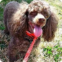Adopt A Pet :: Junior - Spartanburg, SC