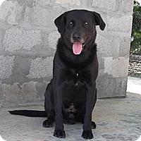 Adopt A Pet :: Dexter - Key Biscayne, FL