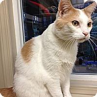 Adopt A Pet :: Milo - Maple Ridge, BC