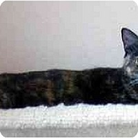 Adopt A Pet :: Sweetie Cat - Tomball, TX
