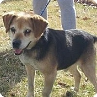 Adopt A Pet :: Nik - Seymour, CT