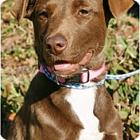 Adopt A Pet :: Raia - PENDING - Westport, CT