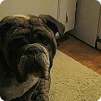 Adopt A Pet :: Preston - Cibolo, TX