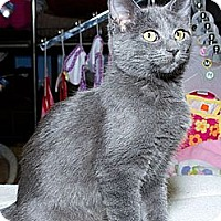 Adopt A Pet :: Habanaro N - Sacramento, CA