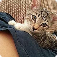 Adopt A Pet :: Marcella - San Diego, CA