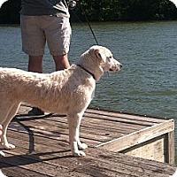 Adopt A Pet :: Heidi - Brattleboro, VT