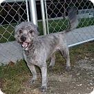 Adopt A Pet :: Sparkie