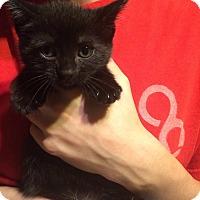 Adopt A Pet :: Hermes - Putnam, CT