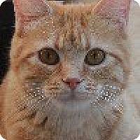 Adopt A Pet :: Cammie - Savannah, MO