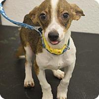 Adopt A Pet :: Squeak - Phoenix, AZ