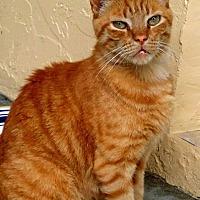 Adopt A Pet :: Furbe - Bonita Springs, FL