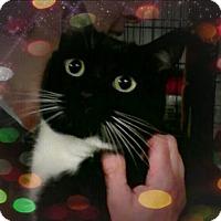 Adopt A Pet :: Tommy Boy - Trevose, PA