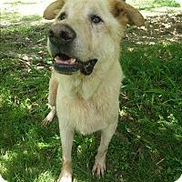 Adopt A Pet :: Hudson - Louisville, KY