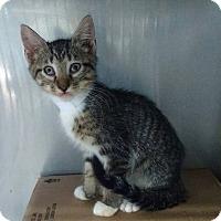 Adopt A Pet :: ANNIE - Powellsville, NC
