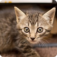 Adopt A Pet :: Jojo - Fountain Hills, AZ
