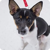 Adopt A Pet :: Charley - Grand Rapids, MI