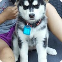 Adopt A Pet :: Maggie-pending - Saskatoon, SK