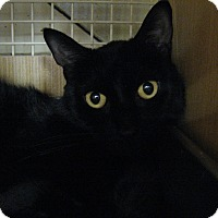 Adopt A Pet :: BLACKIE - New york, NY