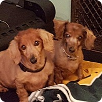 Adopt A Pet :: Boo & Brody - Union Grove, WI
