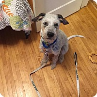 Cattle Dog Mix Dog for adoption in Princeton, Minnesota - Mitchel