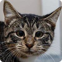 Adopt A Pet :: NIGHTCRAWLER - Decatur, GA