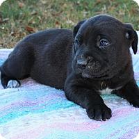 Adopt A Pet :: Pocahontas $250 - Seneca, SC