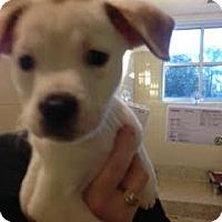 Adopt A Pet :: Waffle - Aiken, SC