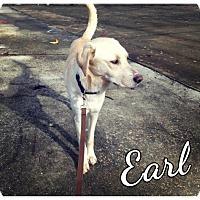 Adopt A Pet :: Earl - Mobile, AL