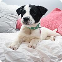 Adopt A Pet :: Bettye - Eden Prairie, MN