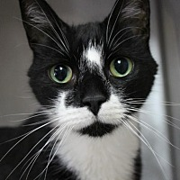 Adopt A Pet :: Ralph - Hilton Head, SC