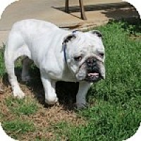Adopt A Pet :: Maude - Winder, GA