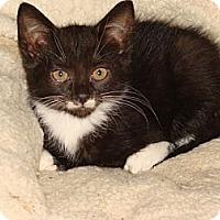 Adopt A Pet :: Polly - Spotsylvania, VA