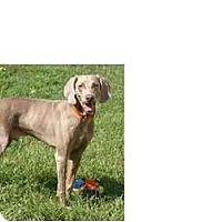 Adopt A Pet :: Barker - Eustis, FL
