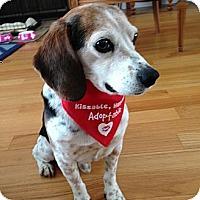 Adopt A Pet :: Jed - Wilmette, IL