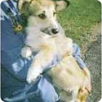 Adopt A Pet :: Jill - Inola, OK