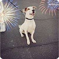 Adopt A Pet :: Lucky - Surprise, AZ