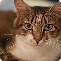 Adopt A Pet :: Boo Boo - Columbia, MD