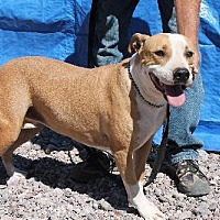 Adopt A Pet :: Utah - Golden Valley, AZ